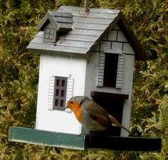 Foto Vogelhäuschen