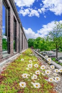 Gründach auf Schulgebäuden